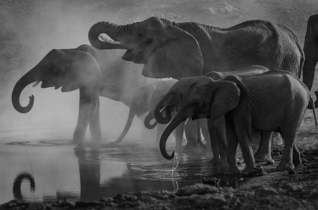Die Tierwelt des Landes beeindruckt nachhaltig auf einer Reise nach Namibia.