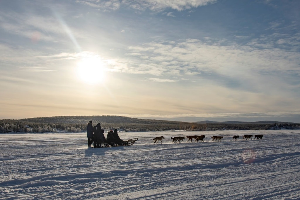 Husky-Schlitten-Safari in Schweden