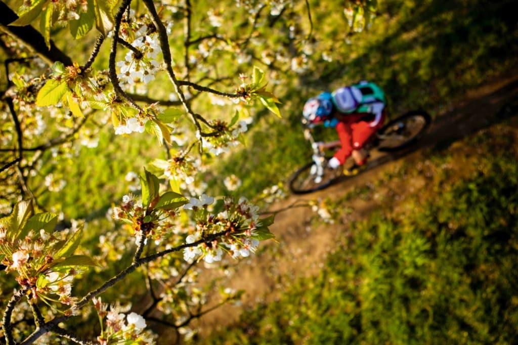 MTB-Biker im Wald von oben fotografiert