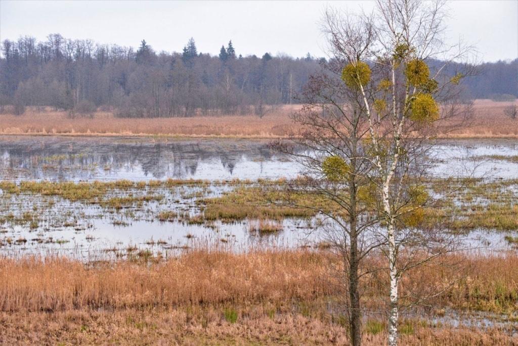 Sumpfwiesen in Polen