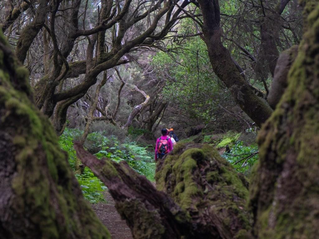 Wanderer in einem Wald auf El Hierro
