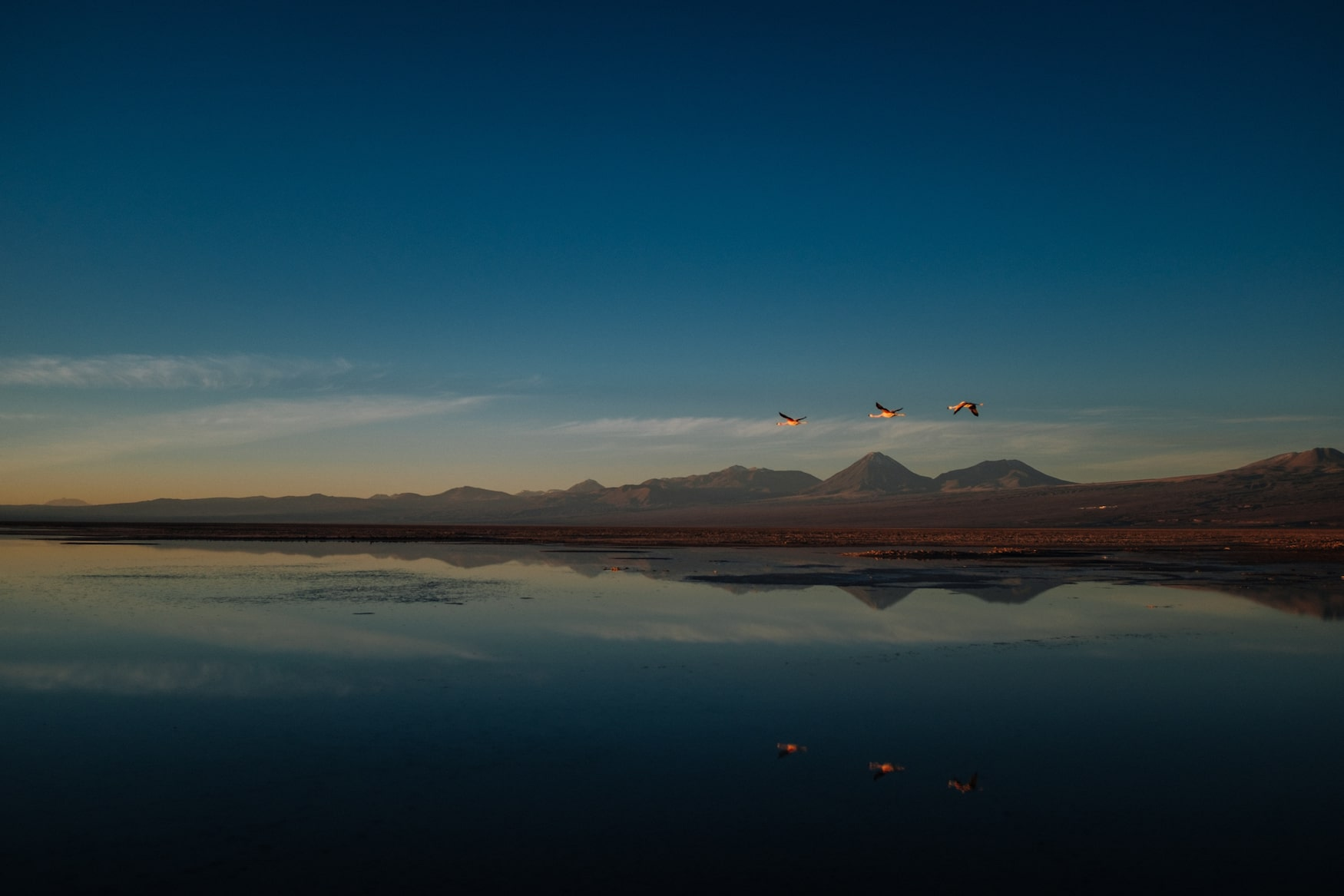 Flamingos über See