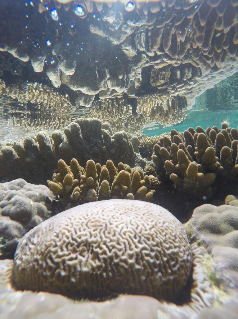 Die Korallenvielfalt in Raja Ampat ist enorm.