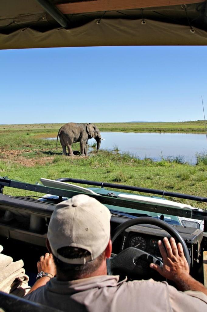 Park-Ranger sitzt im Auto und beobachtet Elefanten