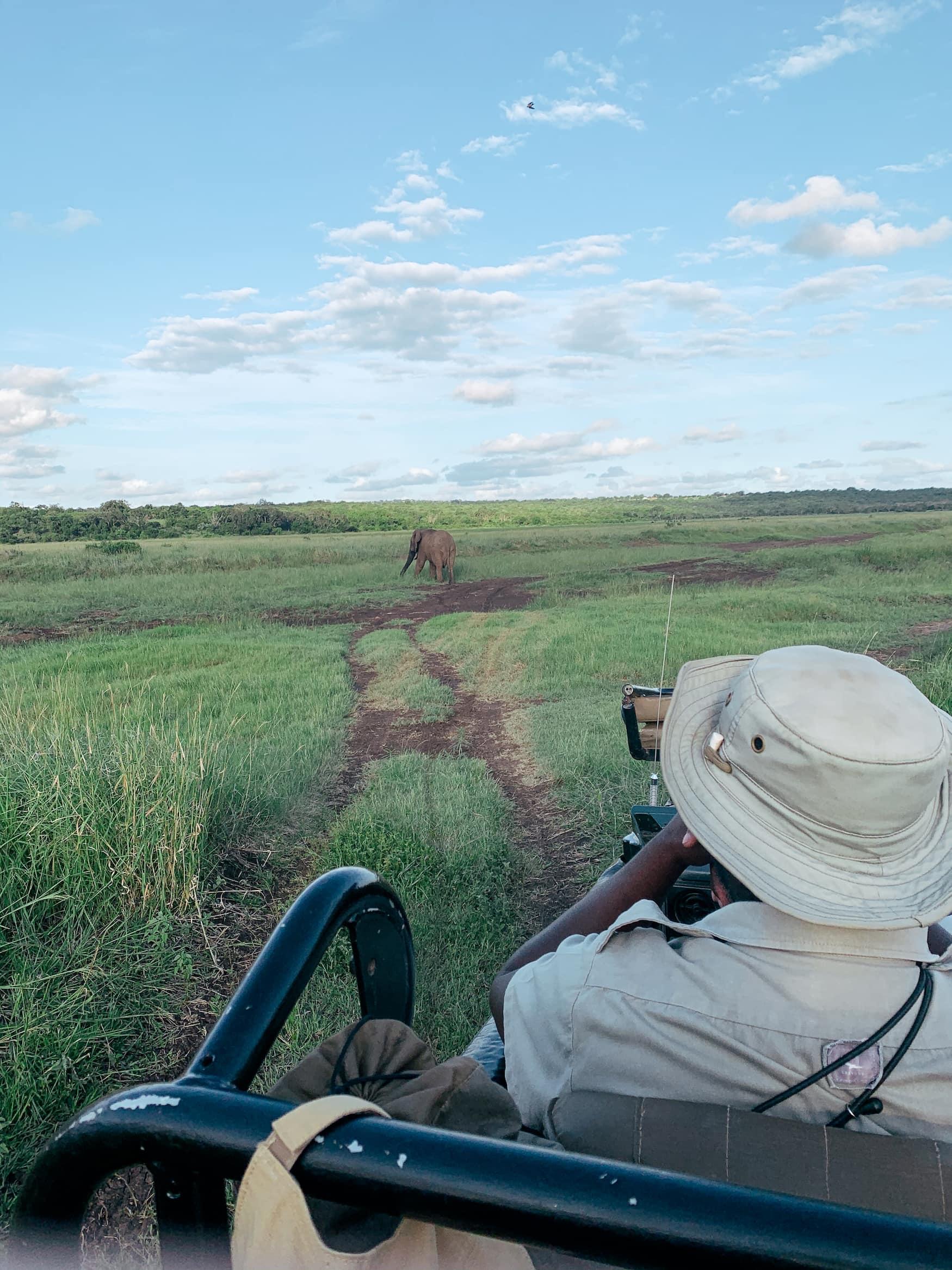 Elefant spaziert durch südafrikanische Landschaft während Safari
