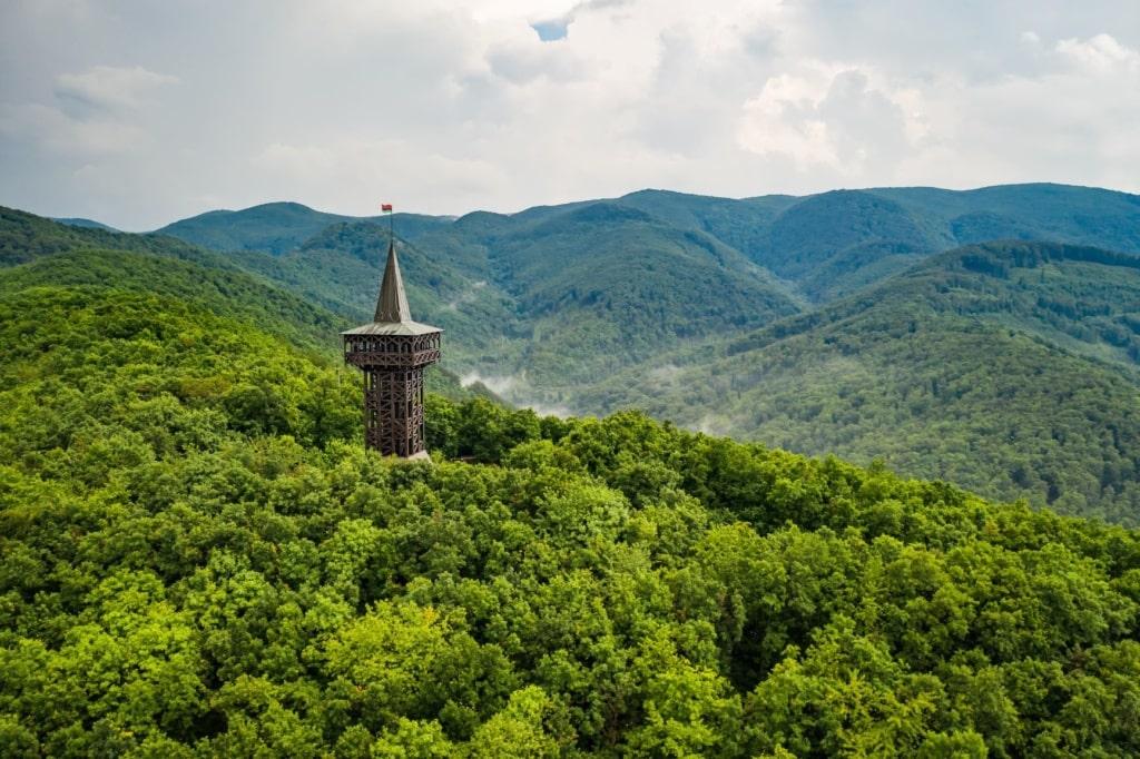 Wald im Szalajka-Tal in Ungarn