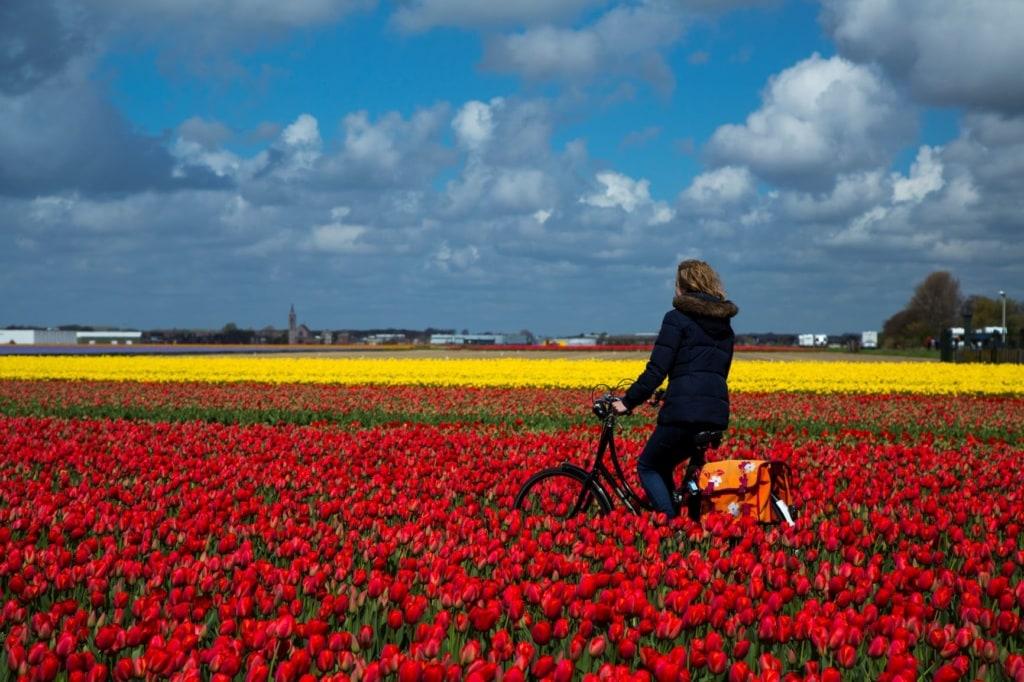 Frau auf Fahrrad im Tulpenfeld Bollenstreek