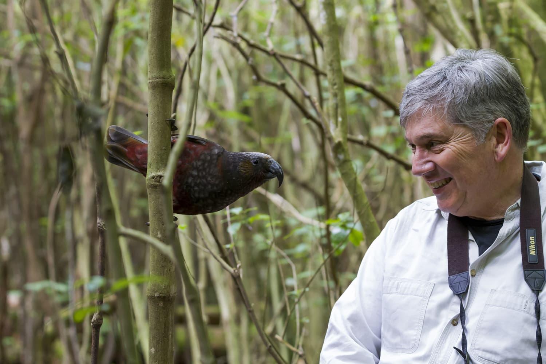 Mann beobachten Vogel im Naturschutzgebiet Zealandia in Wellington
