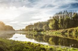 Donauauen bei Sonnenschein