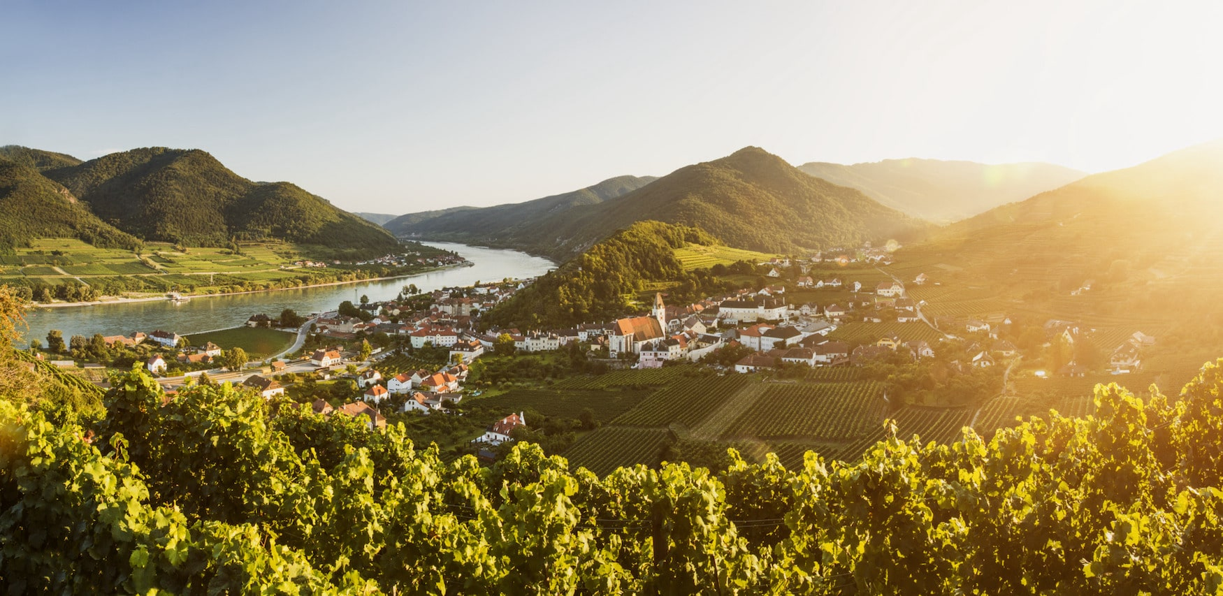 Weinreben vor der Ortschaft Spitz in Niederösterreich