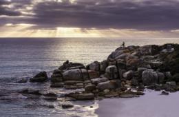 Die Bay of Fires ist eine Bucht an der nordöstlichen Küste Tasmaniens, die sich von der Binalong Bay bis zum Eddystone Point erstreckt.