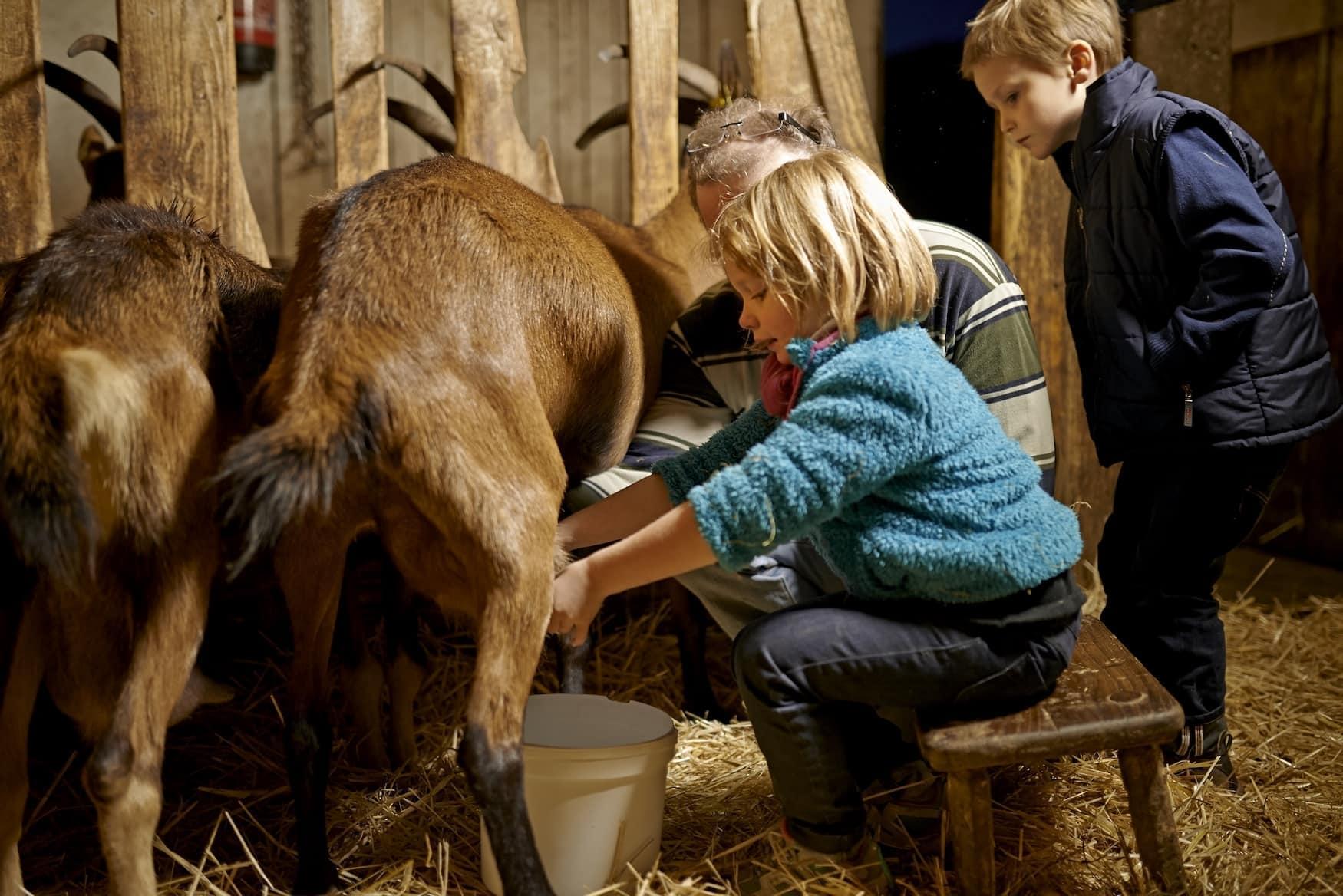 Kinder sitzen in einem Stall und melken Kühe