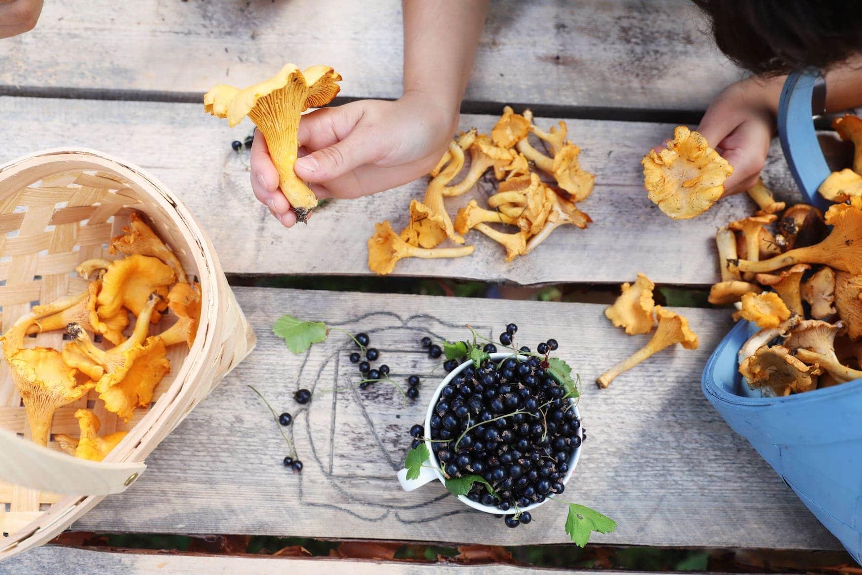 Pilze und Beeren aus finnischen Wäldern