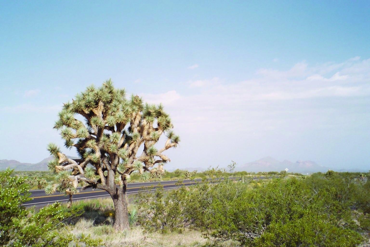 Joshua Tree Forest Parkway in Arizona