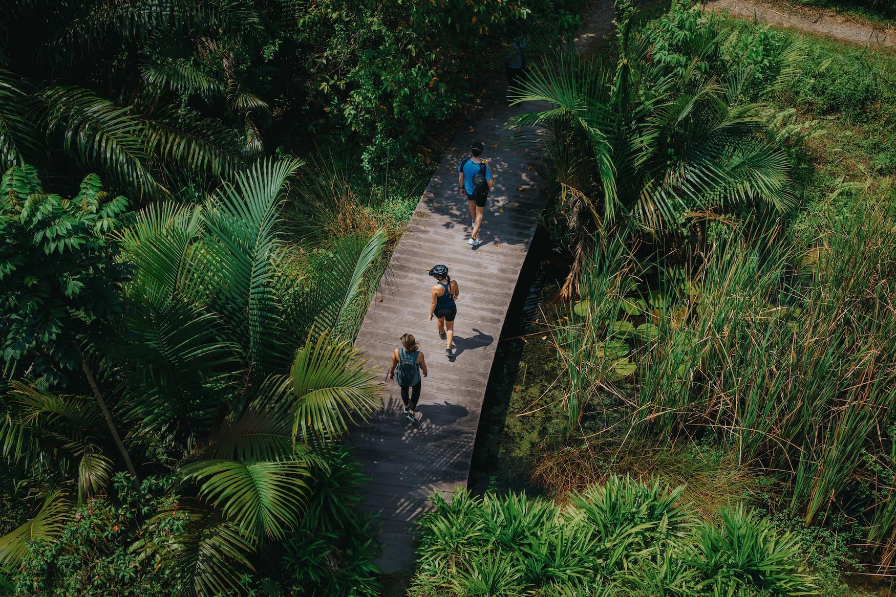 Menschen spazieren durch Naturreservat in südostasiatischer Metropole