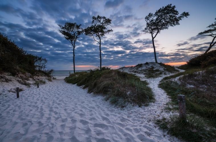 Der feinsandige Darßer Weststrand ist für seine eindrucksvollen, vom Wind geformten Bäume, auch genannt Windflüchter, bekannt.
