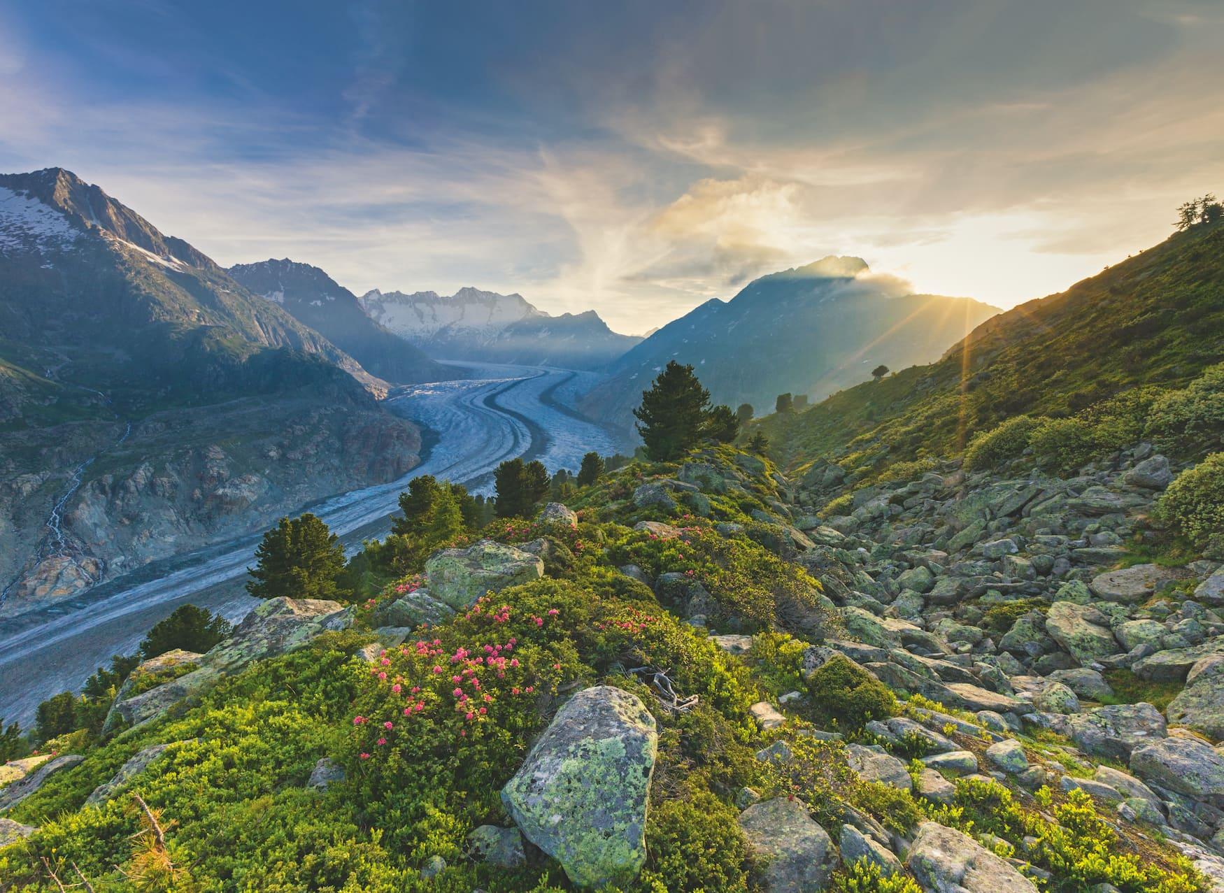 Blick vom Wandergebiet Aletschwald auf den Grossen Aletschgletscher