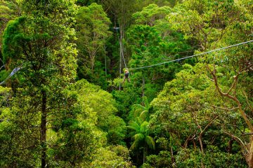 Zipline-Tour im Tamborine Nationalpark