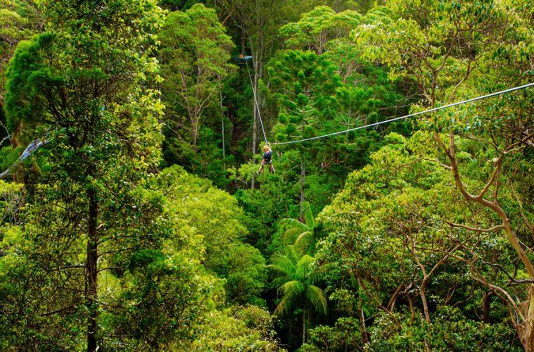 Zipline-Tour im Tamborine Nationalpark
