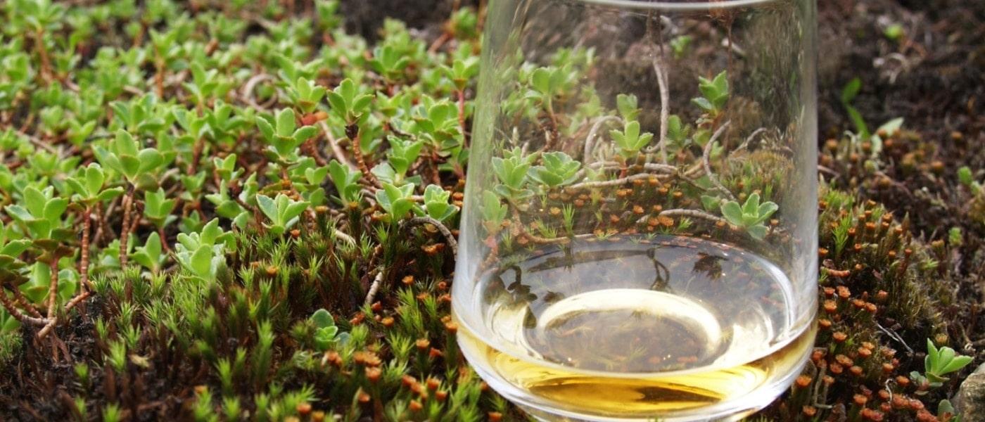 Glas Whisky in der Natur
