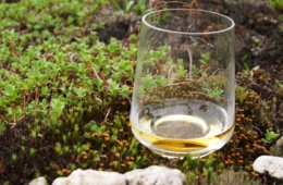Glas Whisky in der Natur