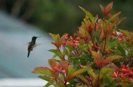 Vögel in Panama: schillernd und vielfältig