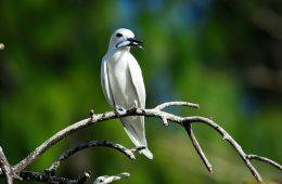Vogel auf den Seychellen