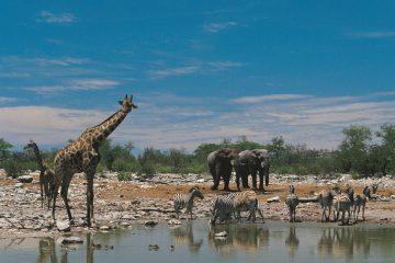 Tour Vitals Rundreisen führen nach Tansania und ins südliche Afrika.
