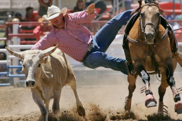 Rodeo in Tucson: Action in der Arena