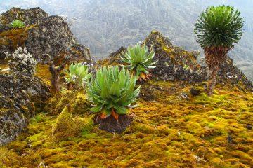 Das Ruwenzori-Gebirge in Uganda ist ein Naturparadies.